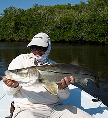 Florida Snook