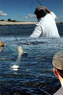Saltwater Fly Fishing For Albies