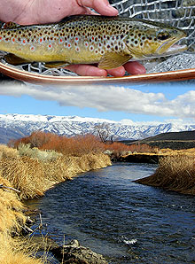 Fly Fishing California
