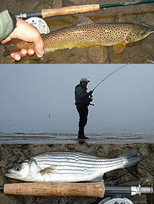 Fishing Maine on Maine Fly Fishing   Sea Run  Brown Trout   Stripers Coming In With The