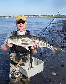 Rhode Island Striped Bass