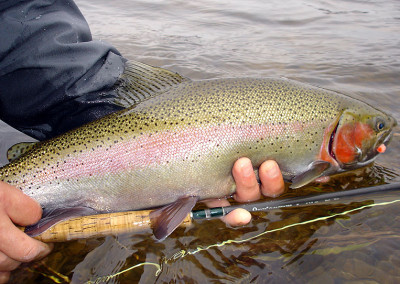 Rainbow Trout With Egg